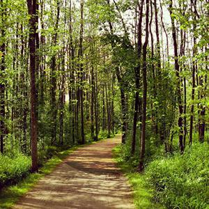 plein-air - Parc-nature du Bois-de-l'Île-Bizard